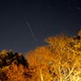 Geminid Meteor and holiday lit trees